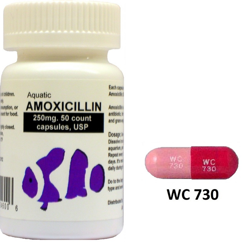 amoxicillin a detailed description online canadian pharmacy